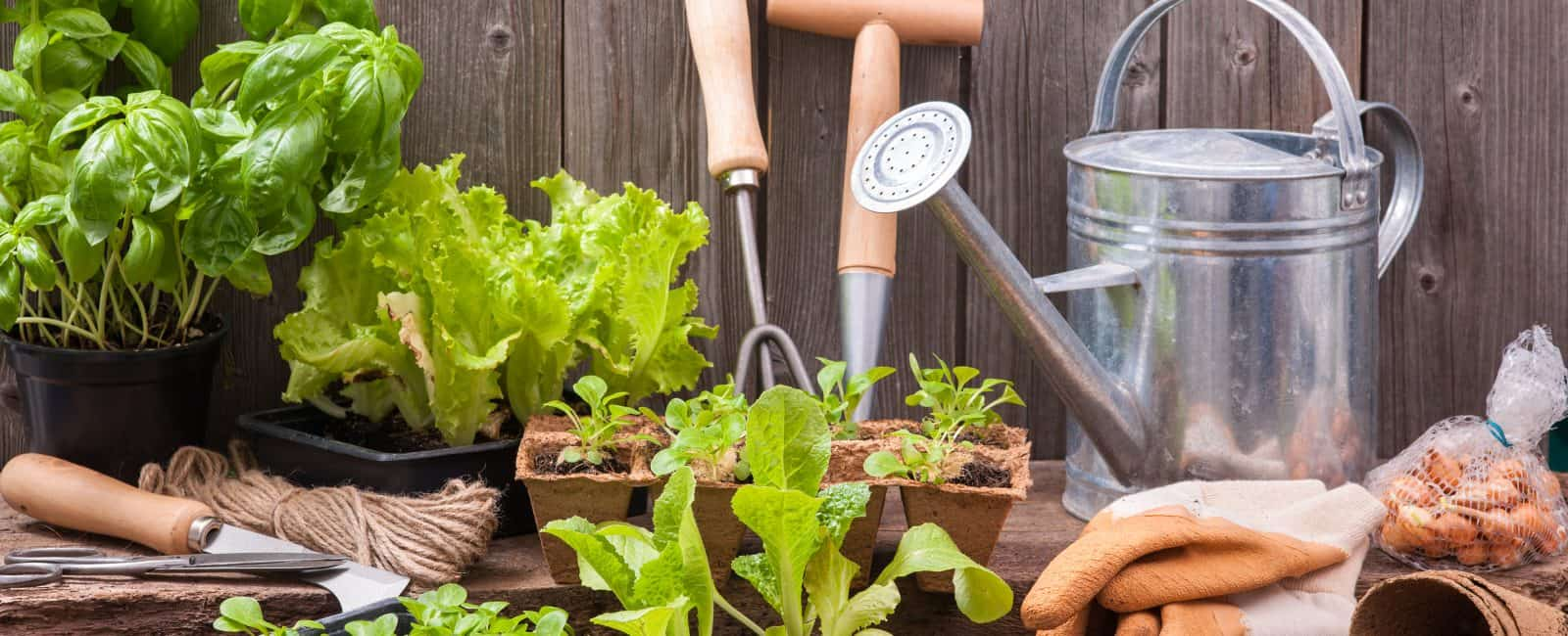 Square Foot Gardening Your Family Will Want To Try