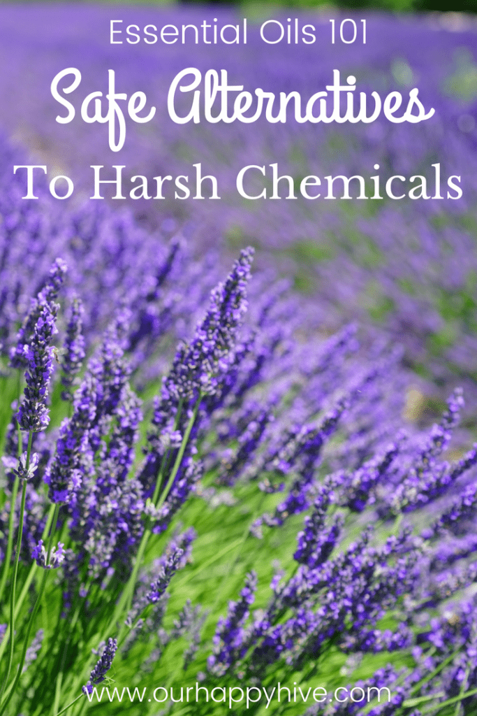 Lavender field with text Essential Oils 101 Safe Alternatives To Harsh Chemicals