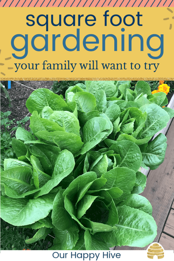 Rows of Romaine Lettuce with text Square Foot Gardening your family will want to try