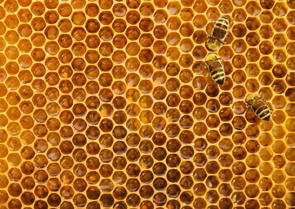 Bees on the honeycomb background